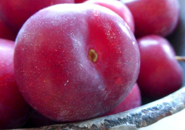Sommerküche Zum Vorbereiten : Chinesische bratpflaumen buchvorstellung sommerküche von lisa